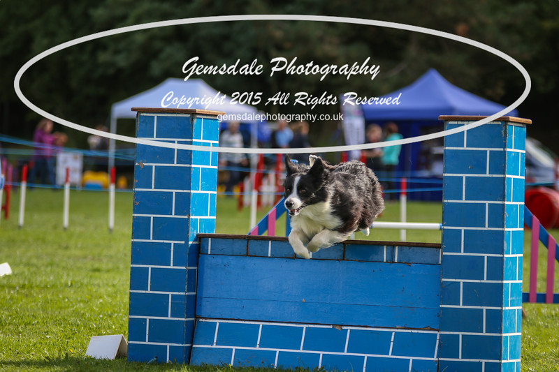 Southdowns Agility 25th September 2016-5012
