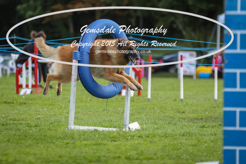 Southdowns Agility 25th September 2016-5047