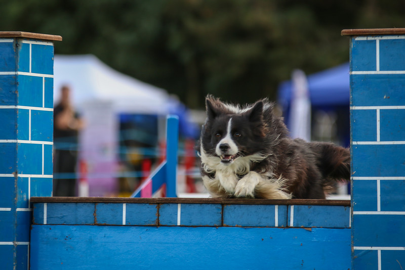 Southdowns Agility 25th September 2016-5039
