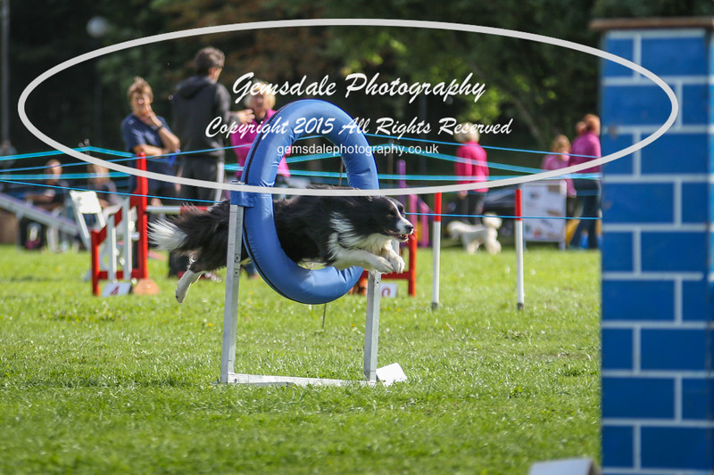 Southdowns Agility 25th September 2016-5018