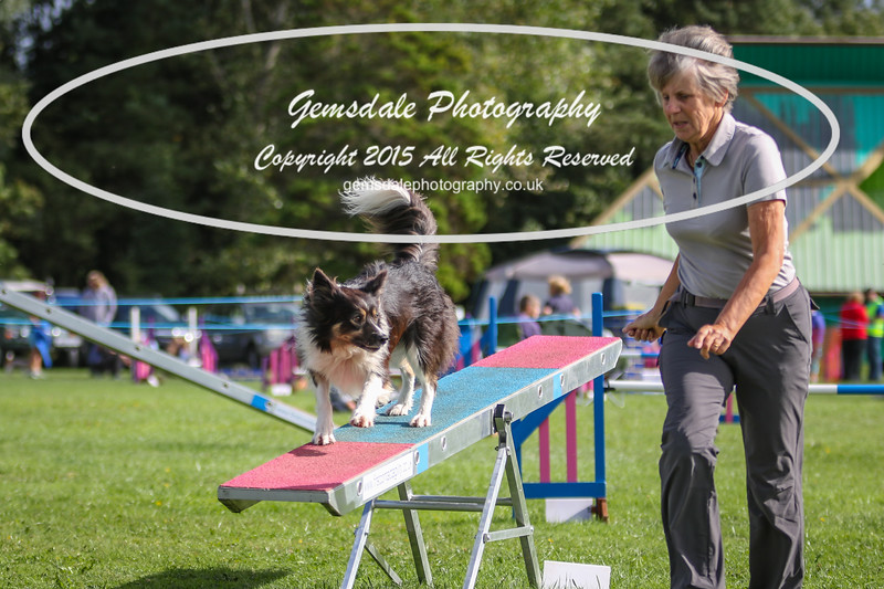 Southdowns Agility 25th September 2016-5025