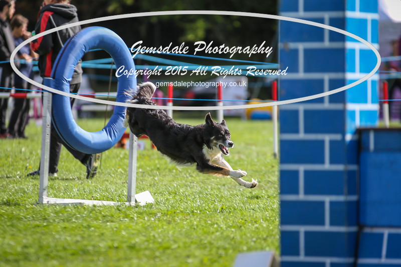 Southdowns Agility 25th September 2016-5014
