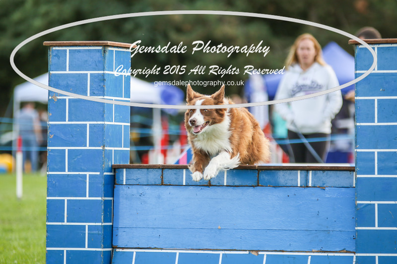Southdowns Agility 25th September 2016-5009