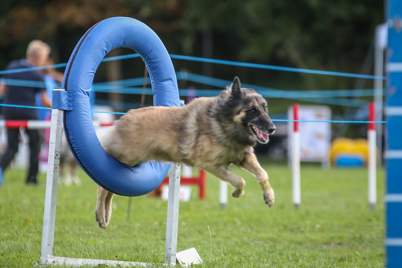 Southdowns Agility 25th September 2016-5034