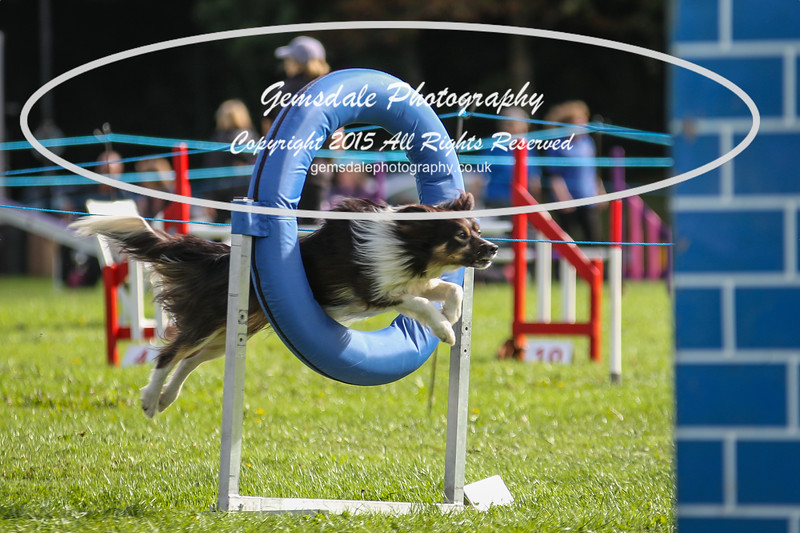 Southdowns Agility 25th September 2016-5023