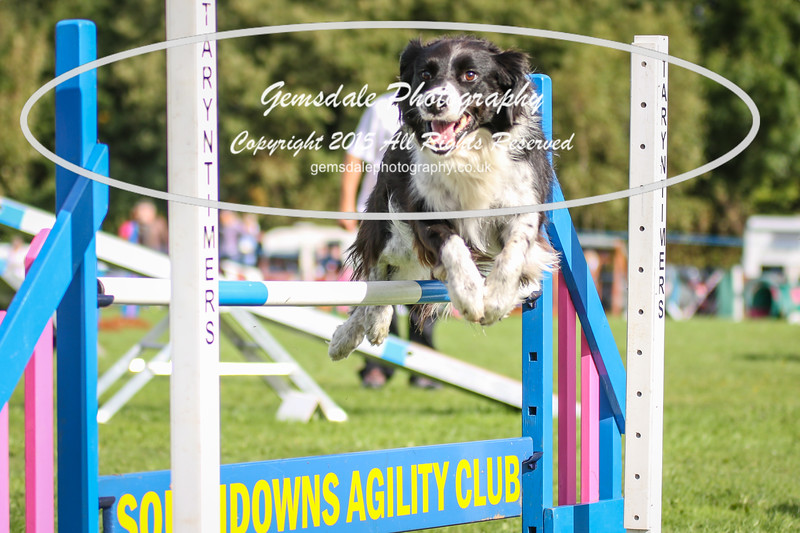 Southdowns Agility 25th September 2016-5003