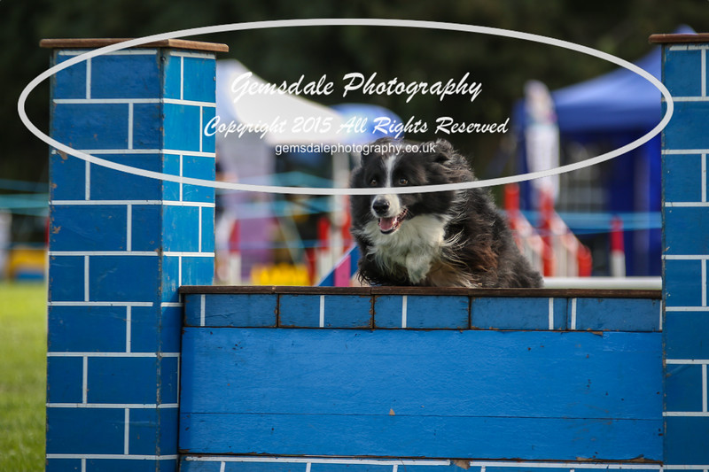 Southdowns Agility 25th September 2016-5029