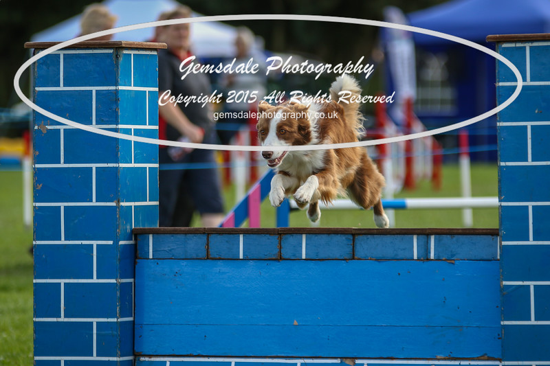 Southdowns Agility 25th September 2016-5020