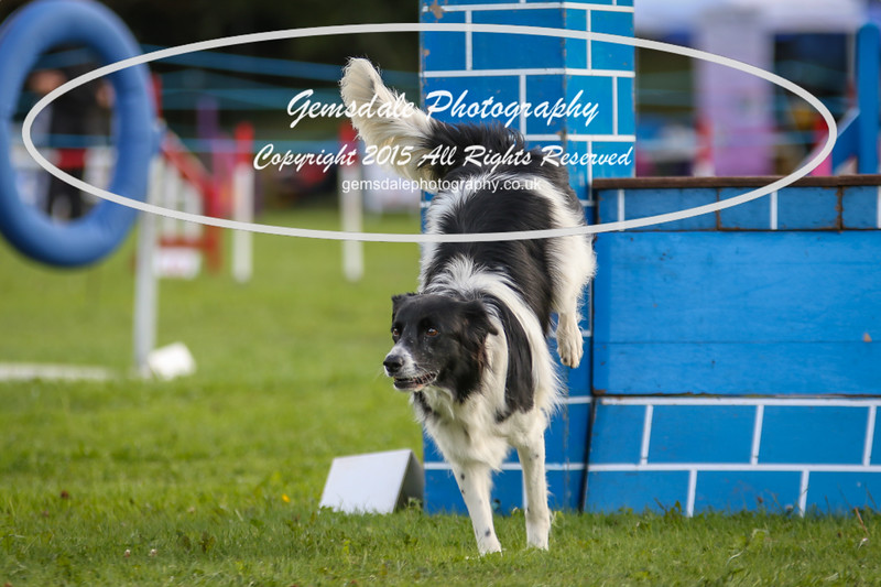 Southdowns Agility 25th September 2016-5044