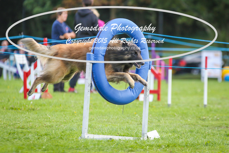 Southdowns Agility 25th September 2016-5007