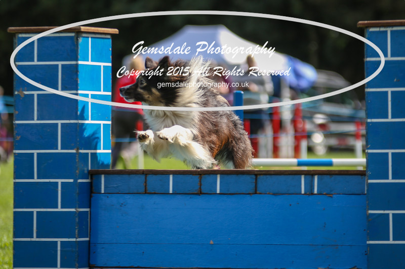 Southdowns Agility 25th September 2016-5024