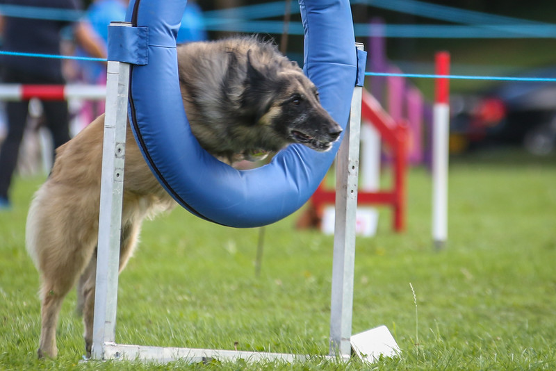 Southdowns Agility 25th September 2016-5033