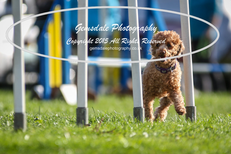 Southdowns Agility 25th September 2016-6001