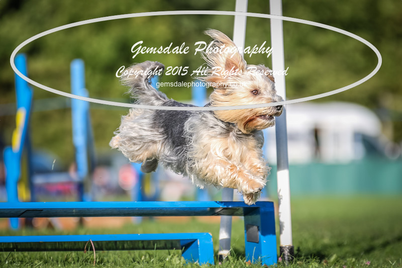 Southdowns Agility 25th September 2016-6010
