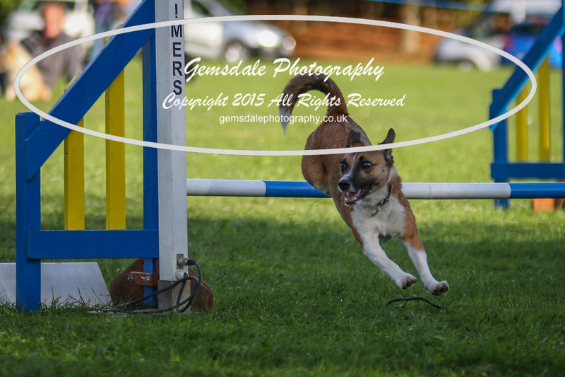 Southdowns Agility 25th September 2016-6008