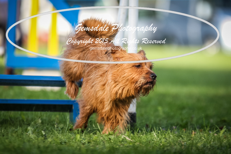 Southdowns Agility 25th September 2016-6033