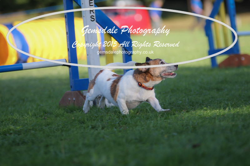 Southdowns Agility 25th September 2016-6024