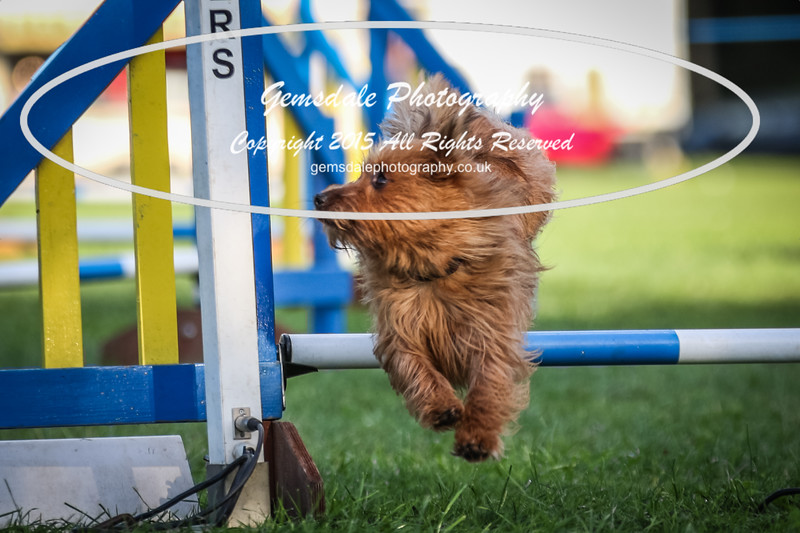 Southdowns Agility 25th September 2016-6035