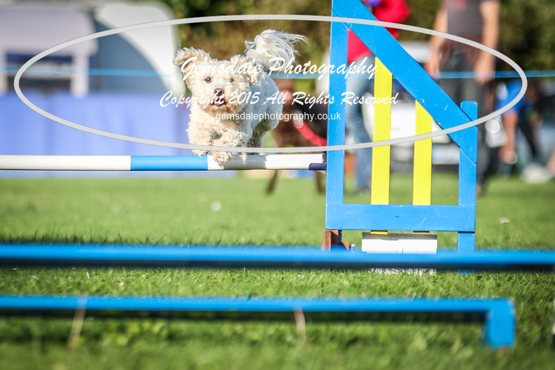 Southdowns Agility 25th September 2016-6015