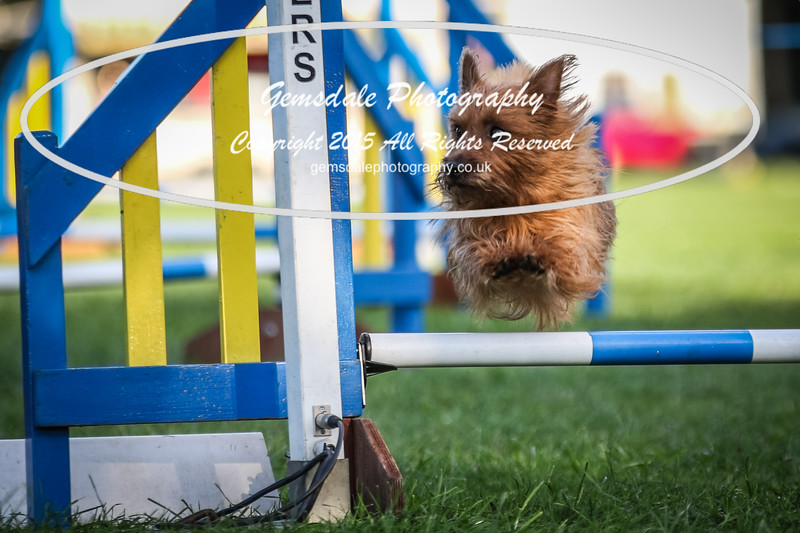Southdowns Agility 25th September 2016-6034
