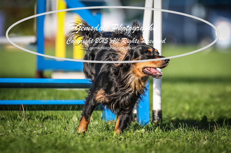Southdowns Agility 25th September 2016-6021