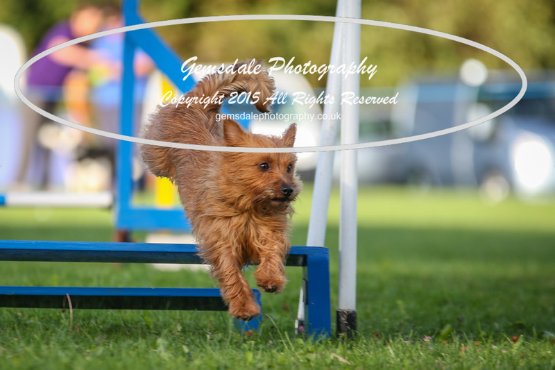 Southdowns Agility 25th September 2016-6032