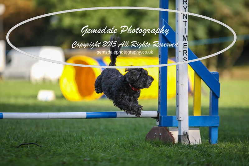 Southdowns Agility 25th September 2016-6042