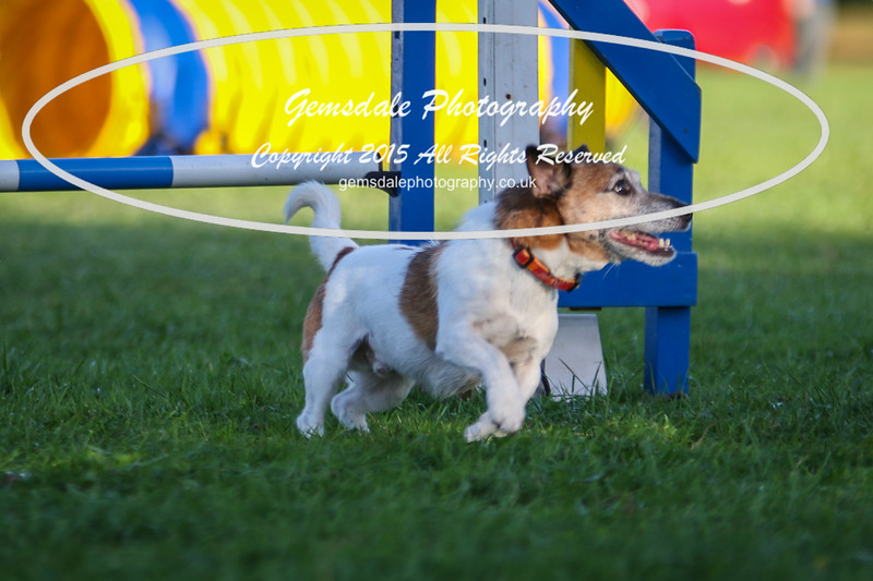 Southdowns Agility 25th September 2016-6023