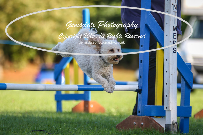 Southdowns Agility 25th September 2016-6012