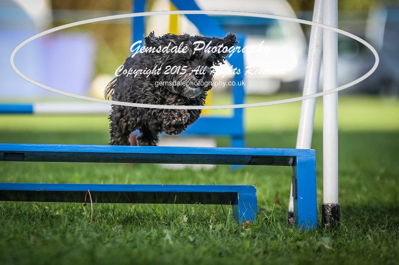 Southdowns Agility 25th September 2016-6039