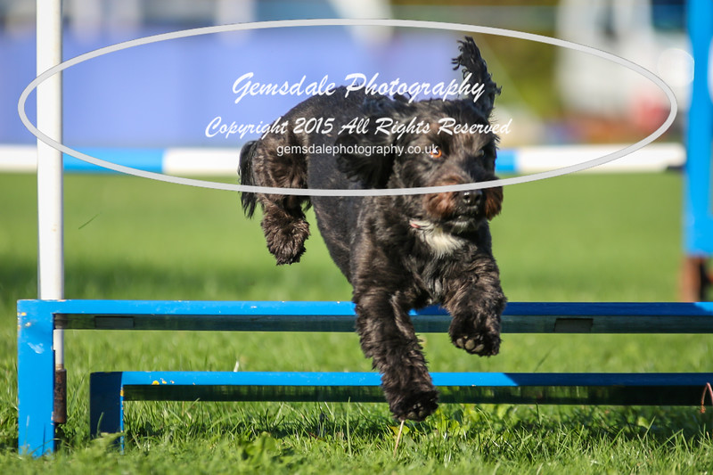 Southdowns Agility 25th September 2016-6013