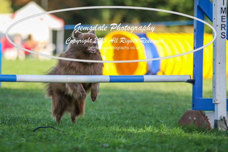 Southdowns Agility 25th September 2016-6026