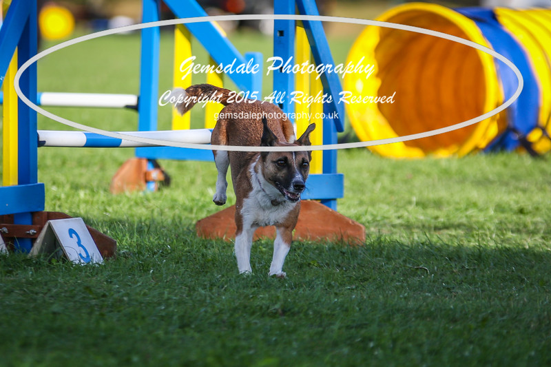Southdowns Agility 25th September 2016-6007