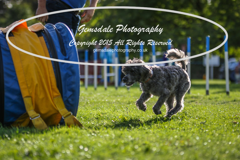 Southdowns Agility 25th September 2016-6006
