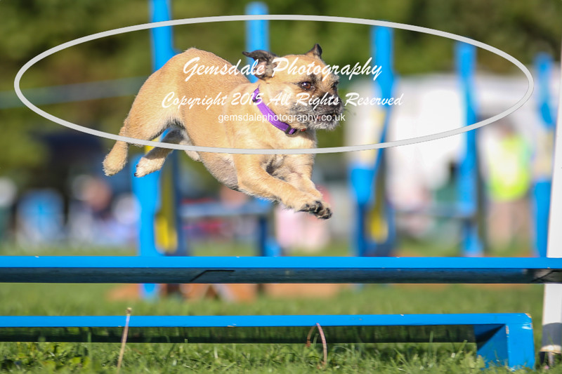 Southdowns Agility 25th September 2016-6009