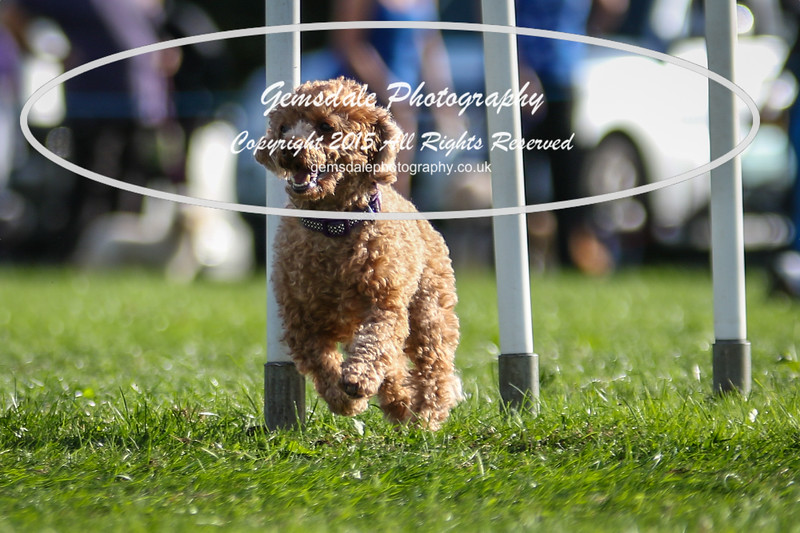 Southdowns Agility 25th September 2016-6003
