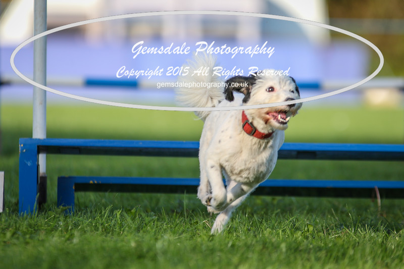 Southdowns Agility 25th September 2016-6028