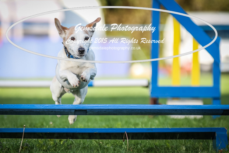 Southdowns Agility 25th September 2016-6036