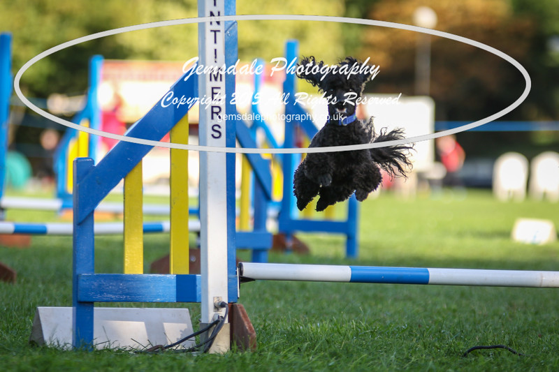Southdowns Agility 25th September 2016-6030