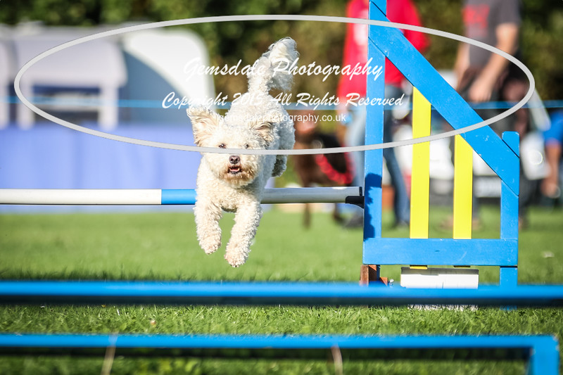 Southdowns Agility 25th September 2016-6016