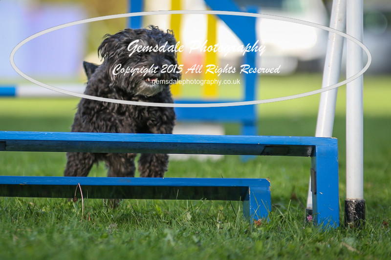 Southdowns Agility 25th September 2016-6038