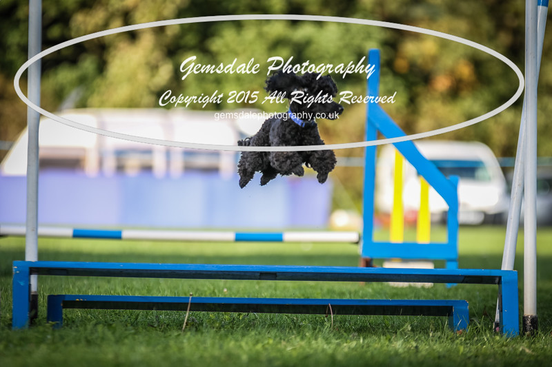 Southdowns Agility 25th September 2016-6029
