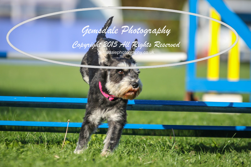 Southdowns Agility 25th September 2016-6020