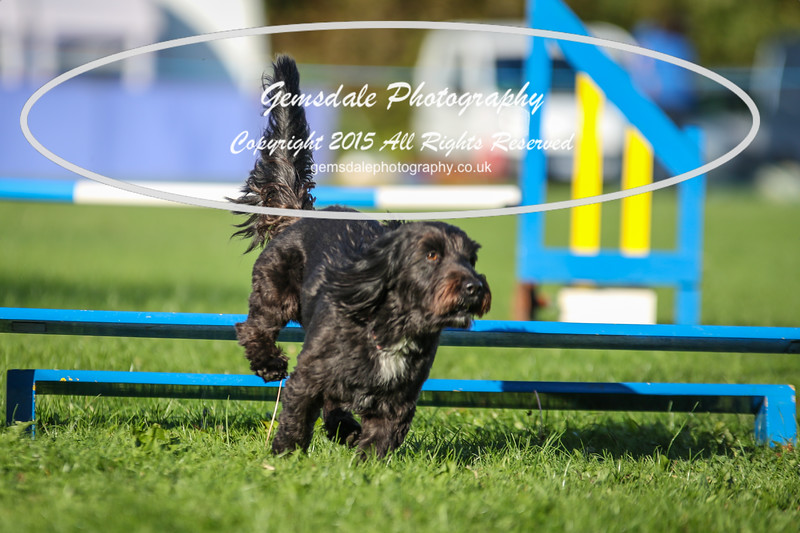 Southdowns Agility 25th September 2016-6014