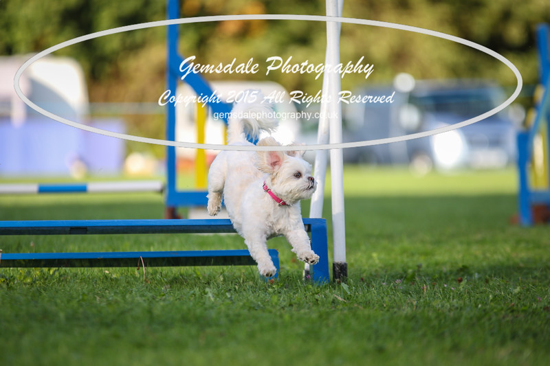 Southdowns Agility 25th September 2016-6043