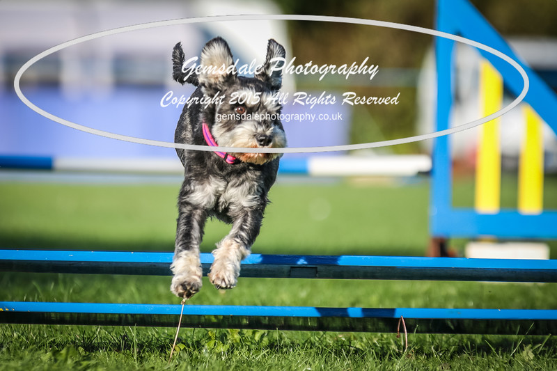 Southdowns Agility 25th September 2016-6019