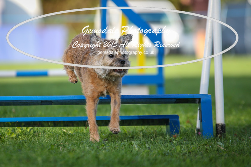 Southdowns Agility 25th September 2016-6046
