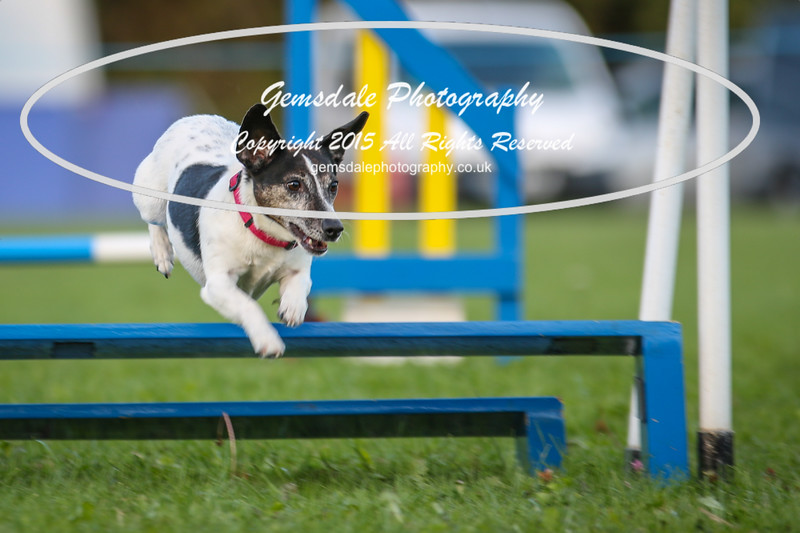 Southdowns Agility 25th September 2016-6047