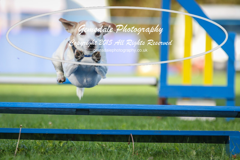 Southdowns Agility 25th September 2016-6037