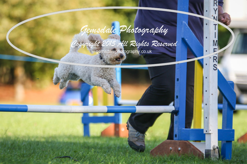 Southdowns Agility 25th September 2016-6011